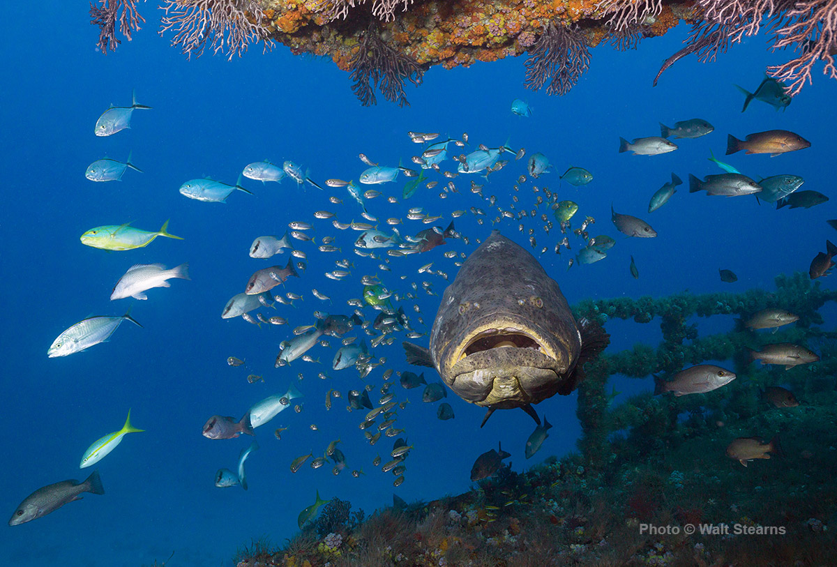 self proclaimed grouper capital of the world - HD 1200×813